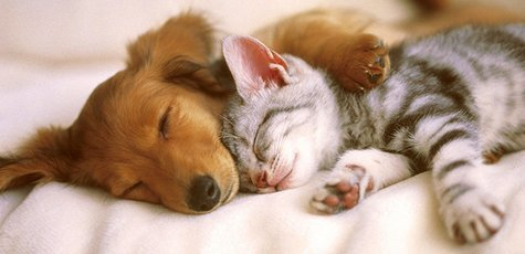 Cat_and_dog