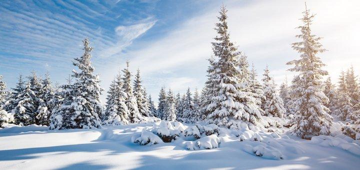 От 4 дней отдыха на Новый Год и Рождество в оздоровительном комплексе «Гортензия» в Поляне