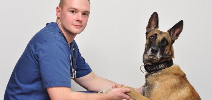 Сертификат на все виды услуг в ветеринарной клинике «Доверие»